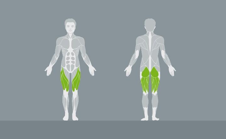muscolatura-EX01-2