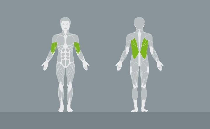 muscolatura-EX03-1
