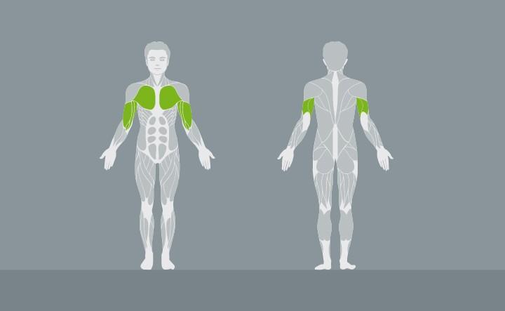 muscolatura-EX03-2