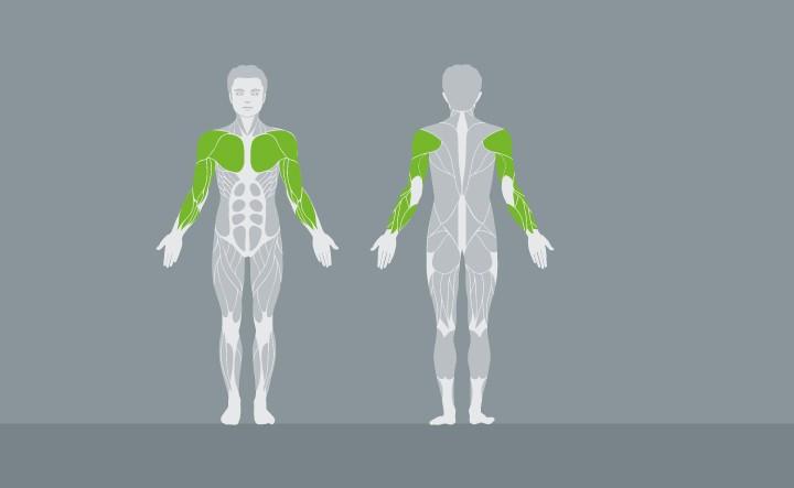muscolatura-EX05-1