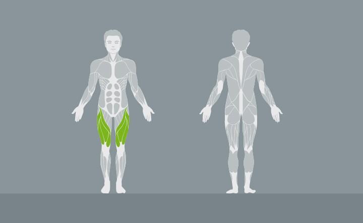 muscolatura-EX01-1