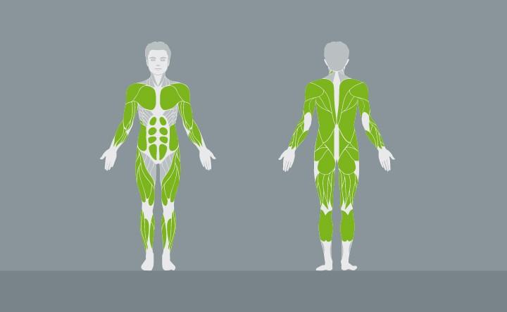 muscolatura-EX04-1