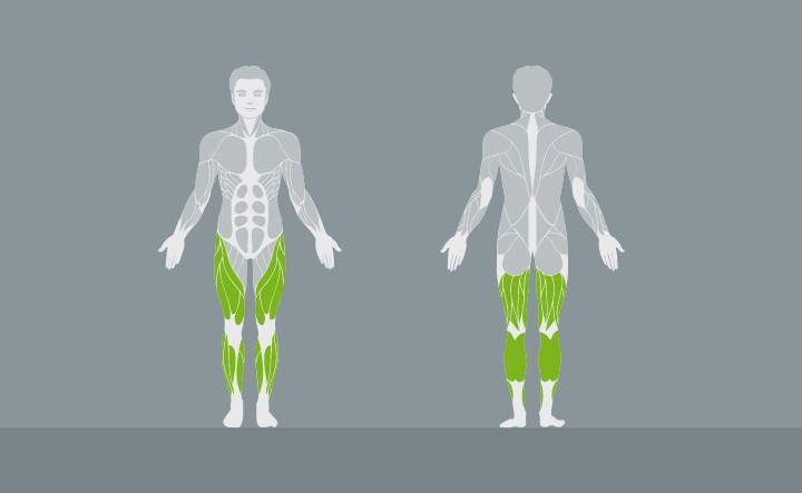 muscolatura-EX04-2